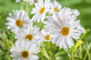 online flowers to UAE