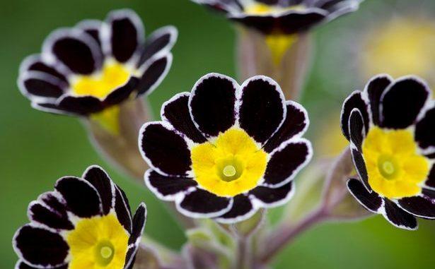 Gorgeous Aphrodisiacs flowers