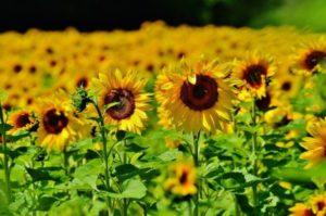 12 Gorgeous Aphrodisiacs flowers
